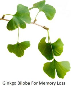 Ginkgo Biloba For Memory Loss